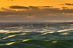 Wind turbines at sunset ! [Explored 6/22/2016] (Robie..) Tags: windturbines washington nikond750 sunset
