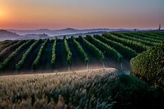 Roddi Sunrise (carlogaia) Tags: morning sunrise early alba wheat unesco doc wineyards grano langhe docg roddi verduno levataccia
