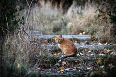 Street cat 151 (Yalitas) Tags: pet cats cat canon kat feline chat kitty gato felino katze katzen kot kedi kass gatta streetcat kotka  kocka  katte  katzchen kottur