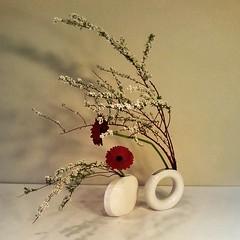 Jenny's #ikebana,  double vase