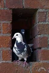 Pigeon Hole! (Jainbow) Tags: old window hole pigeon portsmouth jainbow
