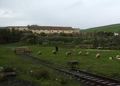 End of the line (diffendale) Tags: railroad window train shot railway morocco maroc marocco marruecos marokko fas oncf ovisaries  bostaurus  almarib marocum  faskrall officenationaldescheminsdefer lmarib rabattomeknes