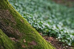 diagonal (Birgit F) Tags: park norway lensbaby norge moss spring kristiansand vår selectivefocus mose vestagder ravnedalen edge80