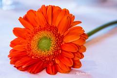 BA-BA BACIAMI:-)) (Roberto.mac.) Tags: basin dolce fiori arancio vaso paesaggio citta profumo baciami robertomac lagerbera