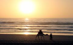agadir sunset (kexi) Tags: ocean sunset sea wallpaper people sun beach water canon sand waves horizon silhouettes tourists agadir camel morocco maroc february atlanticocean 2015 maroko instantfave