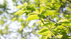201605_08_2560 (noriko_v) Tags: green spring