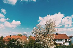 Finally spring is here in #ingolstadt... (Daniel Bswald) Tags: trees nature clouds 35mm canon bavaria spring blossom folk lifestyle bluesky cpl photooftheday picoftheday ingolstadt 22mm goodweather primelens eosm vsco snabshod uploaded:by=flickstagram instagram:photo=12317802860308213322860883212 snabshodphotography instagram:venuename=ingolstadt2cgermany instagram:venue=221042309