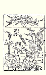 Top  lespedeza; Bottom sacred lotus and Chinese arrowhead (Japanese Flower and Bird Art) Tags: flower japan japanese book lotus chinese picture sacred fabaceae anonymous arrowhead woodblock ukiyo nelumbonaceae sagittaria nelumbo alismataceae lespedeza nucifera trifolia readercollection
