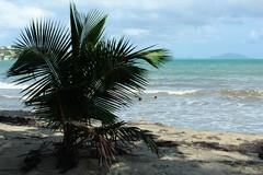 Tropical life (jeanlopez400) Tags: beach puerto rico fajardo vieques humacao