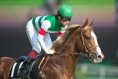 Realista  -May Stakes (arumckF) Tags: tokyo  staygold horserace realista  yuichifukunaga maystakes   noriyukihori   tokioreality