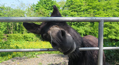 Hello! (Katie_Russell) Tags: ireland field bar bars gate gates donkey fields northernireland ni ulster nireland norniron coleraine countylondonderry countyderry coderry colondonderry colderry loughan countylderry