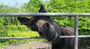 Hello! (Katie_Russell) Tags: ireland field bar bars gate gates donkey fields northernireland ni ulster nireland norniron coleraine countylondonderry countyderry coderry colondonderry colderry loughan countylderry