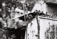 Fuji NEOPAN400 #009 (Gerard0804) Tags: street leica travel blackandwhite bw cats film analog hongkong 50mm fuji kodak f14 kitty ishootfilm iso 400 fujifilm neopan analogue filmcamera m6 ver3 catwalk nofilter 135mm streetcat filmshooting streetphotographer summiluxm preasph filmphotographer filmisbetter filmneverdie