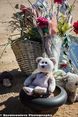 Boron Memorial Bear (Barstow Steve) Tags: california trip flower boron