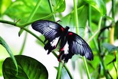 Butterfly #cute#beautiful#garden#cuteness# (foto_galleria) Tags: cute beautiful garden cuteness