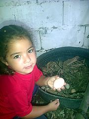 IMG-20160505-05713 (dernst) Tags: jardin huevos cosecha gallinas preescolar