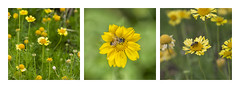Triptico abeja (Chechi Pe) Tags: stilllife blur flower tree verde green art hoja nature fleur wow photography photo leaf nikon triptych dof bokeh fineart flor creative images bee 105 depth vegetal triptico triptychs d610 creativeimages amazingphotos triptyches