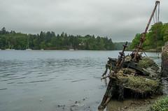 La Licorne (rastapopoulossss) Tags: golf wreck bateau morbihan coque pave