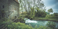Moulin d'Hzecques (CrOS Photographie) Tags: trees france mill nature water river landscape moulin eau decay ruin arbres paysage lys abandonn rurex riivre