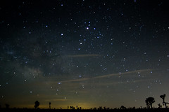 Under the stars in Joshua Tree (mikerastiello) Tags: california ca longexposure stars joshuatree astrophotography joshuatreenationalpark joshuatreecalifornia joshuatreeca