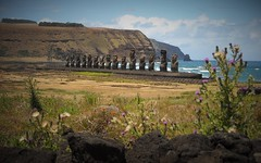 15 Moais standing and the thistle (yanoche) Tags: chile sea sculpture flower statue easter island pascua collapse moai easterisland isla civilisation rapanui moais paques nui rapa