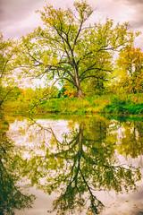 Autumn Sweater (Thomas Hawk) Tags: trees usa reflection tree america unitedstates fav50 unitedstatesofamerica stlouis mo missouri forestpark fav10 fav25