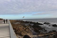 IMG_1106 (fernanda.pallante) Tags: praia faro uruguay teatro playa montevideo farol puntadeleste puntaballena sols losdedos uruguaynatural