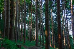 Forest (Eleonora Cacciari) Tags: forest cornoallescale cornoallescaleitaly alberi trees tre albero natura nature outdoor allaperto allaria canon canoneos1200d canonefs18135mmf3556isstm coloridellanatura eos1200d eleonoracacciari emiliaromagna ecacciari