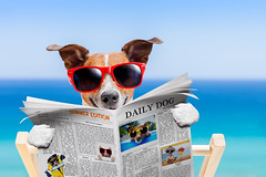 Mitos sobre las mascotas (Tu Nexo De) Tags: mascotas ranas mitos mascotasyanimales tunexodetravelpetsleisureactivitypageshadeliteraturecouchpotatoloungechairjackrussellterrierterrierdogsittingreadingsunbathingparasollazinessfunhatheattemperaturerelaxationhumortropicalclimatevacationstantouristanimals