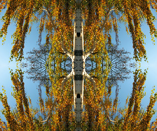 Kaleidoscope of a Birch Tree