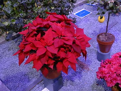 2015 PHS Philadelphia Flower Show (Joe Architect) Tags: philadelphia pennsylvania 2015 pa travel flowershow philadelphaflowershow international flower show philly centercity centercityphiladelphia philadelphiaflowershow pennsylvaniahorticulturalsociety phs
