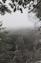 A peaceful landscape (Tarja J) Tags: trees winter fog landscape grey sysmä finnishnature kammiovuori naistenpäivät