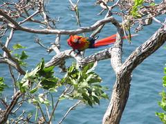 hula hoop sat 056 (Learn, Love, Conserve) Tags: hulahoop saprissa puntaleona feriaverdearanjuez