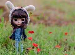 Poppie between poppies