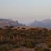 Centennial Dragon blood trees at dawn on Firmhin Plateau, Socotra, Yemen