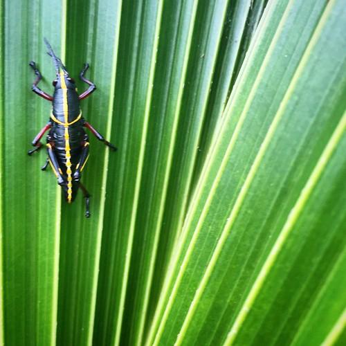 Tropical friend