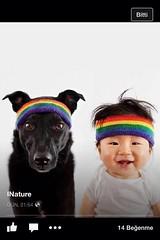 7 (47) (CATS - DOGS) Tags: people dog cats love cat puppy bedroom feeding kitty care kedi kpek yavru
