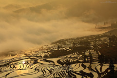 Reflection (Singer ) Tags: china travel light shadow sky mist mountain reflection fog clouds composition sunrise canon iso100 golden geometry terraces silhouettes atmosphere adventure zen singer   f8      oneshot seaofclouds   70mm                 terracedfields 1200sec      canon6d   tree    canonef70300mmf456lisusm  singer186   c