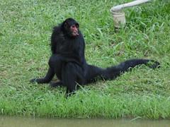 Zoolgico B  C (92) (jemaambiental) Tags: horse dogs birds fauna hamster cavalos cachorros coelho pssaros tigres macacos picapau ursos suricatas periquitos urub escorpio faiso poneis chipanzs esqueletodecobra