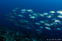 SEN_0243 (huisen) Tags: nikon scuba fisheye tokina weh isotta 1017mm d7100 ysd1