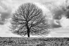 Tree with Bird... (Ody on the mount) Tags: bw monochrome tiere pflanzen himmel wolken sw wanderung bume vgel schwbischealb anlsse