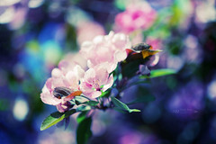 In the morning light (tatiana_brown) Tags: flowers tree nature spring dof blossom canoneos6d