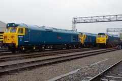 Beautiful 50's Line-up - St Phillips Marsh Open Day - 02-05-16 (techno-phobe) Tags: hoover arkroyal hercules fearless class50 d400 50007 d407 d435 50035 50050 stphillipsmarshopenday020516 40yearsofthehst