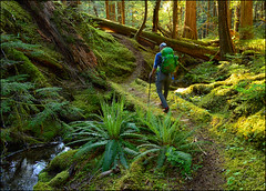 Sulphur Mountain 7 (@GilAegerter / klahini.com) Tags: snow mountains nikon hiking trails climbing nikkor 1855mmf3556g northcascades sulphurmountain glacierpeak 1855mmf3556gvr