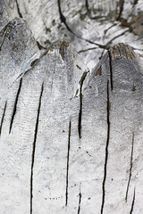 Silver was so glamorous (Djaron van Beek) Tags: abstract dof depthoffield bokeh weathered damaged woodstructure painted silver glow shine metallic almostamonochrome unityofcolors angle streetfurniture artistunknown seatingforkids outdoor abitspherical cracked forms texture pattern repetition pointy chappy povoverthebackofthechairtotheseat madeofatreetrunk lines curves composition framed decay thumbnaillooksverydifferentfromfullscreen eclectic elaborate greytones faded closeup minimal aesthetic subtle urban geometry triangles monochrome zigzag 1000faves djaron djaronvanbeek
