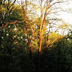 magic hour in the hood (karma (Karen)) Tags: trees light sunset shadows maryland baltimore neighborhood squared magichour iphone