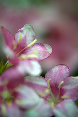 DSC_0093.NEF (tibal26) Tags: flower closeup natural x10
