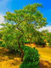 Karmiel, Israel (zingeramit263) Tags: blue sun tree green home yellow canon israel outdoor karmiel sx710hs