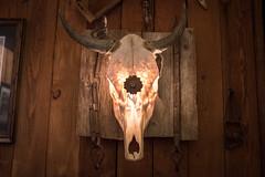 East Shore Smoke House (flippers) Tags: usa america skull restaurant us montana unitedstates bull polson eastshoresmokehouse