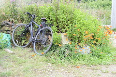 Lammas have a responsibility to limit the number of journeys made by car to and from the site. Bicycles are a great way to get around (Permaculture Association) Tags: bicycle wales cymru gathering ecovillage permaculture 2016 lammas paramaethu